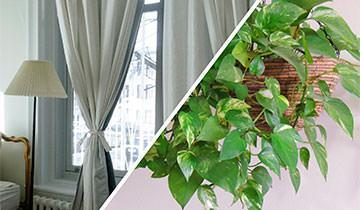 Vaporetto Diffusion fabrics and plants